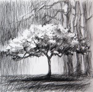 13x13conte_tree
