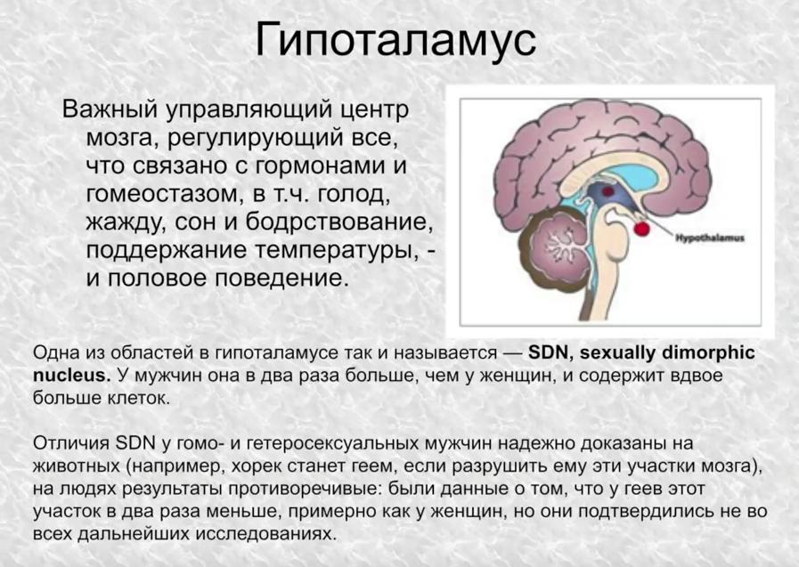 Ася Казанцева. Мозг мужчины и мозг женщины  есть ли отличия