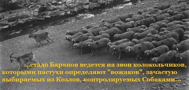 козёл и бараны