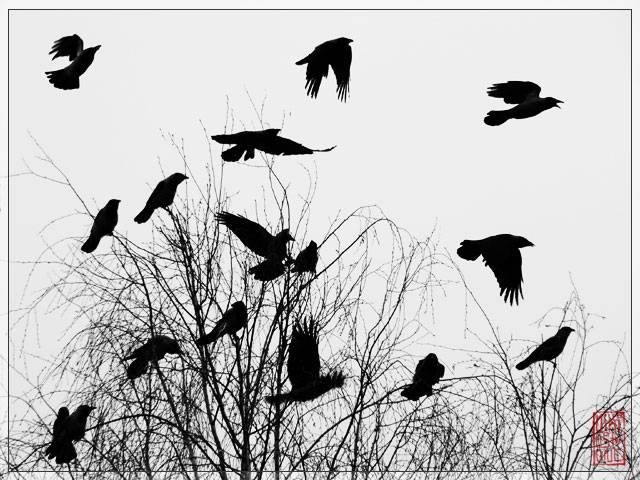 Crows__Murder_I