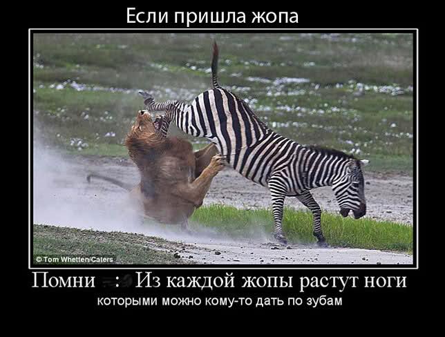 философия34