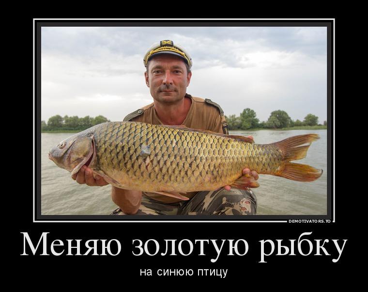 демотиваторы про золотую рыбку этом