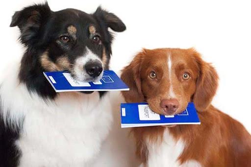 паспорт собак