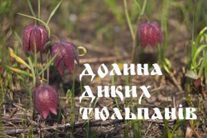IMG_2449ор