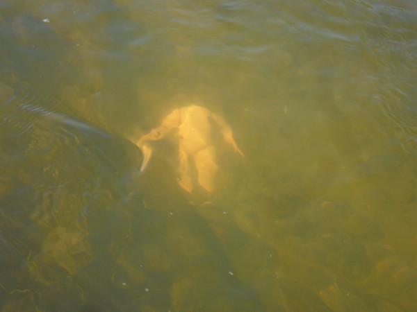 Изображение 1 : Философия рыбалки. 02.05.2013г.