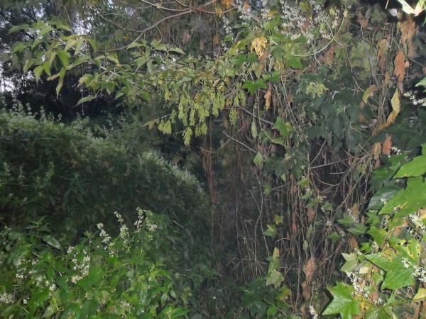 Изображение 1 : Крупные воблеры минноу на малых реках.