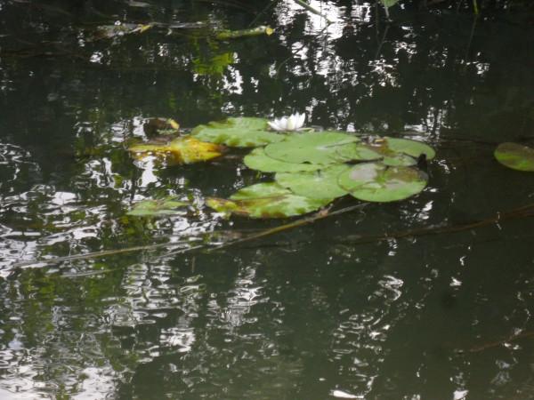 Изображение 1 : Крупные воблеры. Микро-речка.
