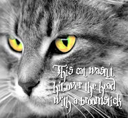 09-02 McGonagall Cat by Tarlan