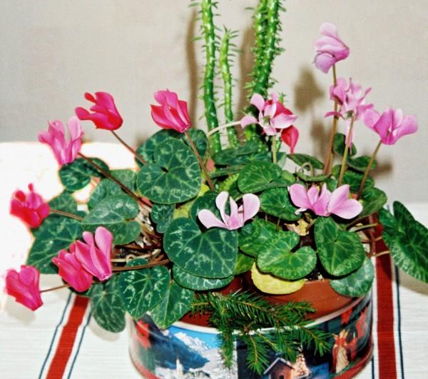 Любимые цветы моей бабушки