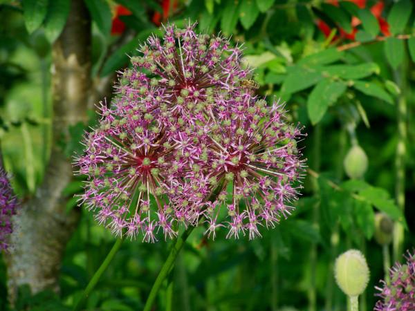 Мой сад: здравствуй, июнь!