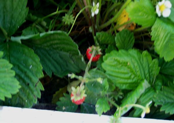 Мой плодовый сад: первая декада июня