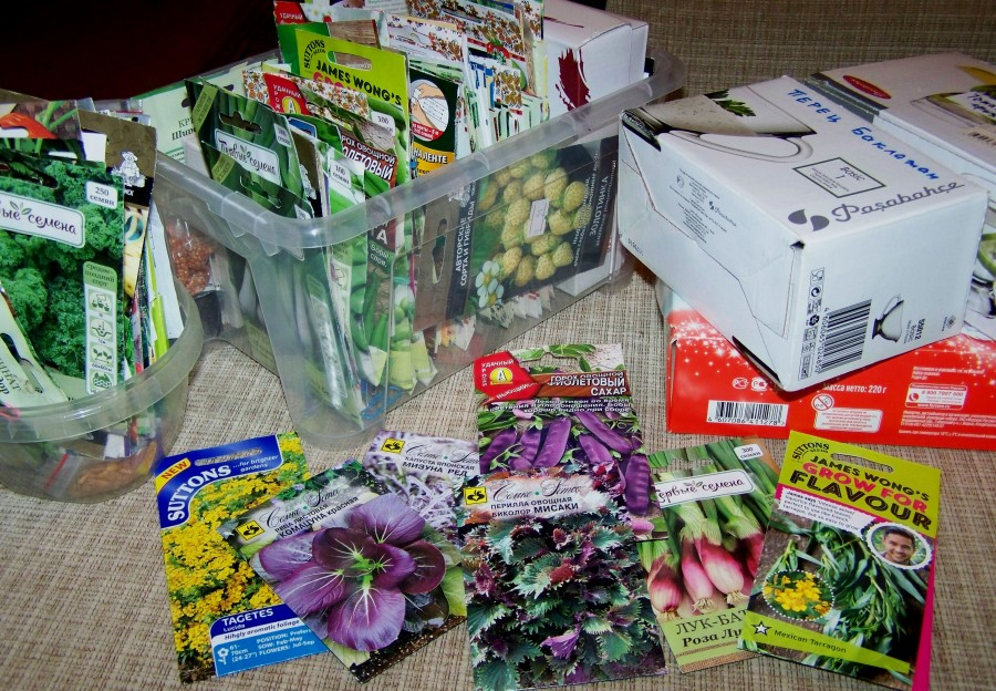 Фотография из блога Натальи https://tasha-jardinier.livejournal.com/