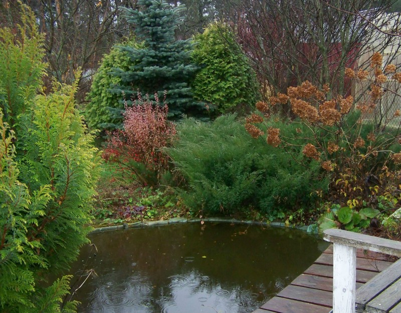 Поздняя осень, скоро пруд закроет лед