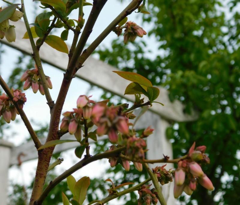 Плодовый сад: перспективы 2020 года