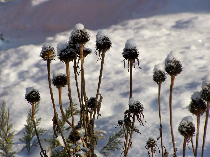 Многолетники накануне зимы: резать или оставить?