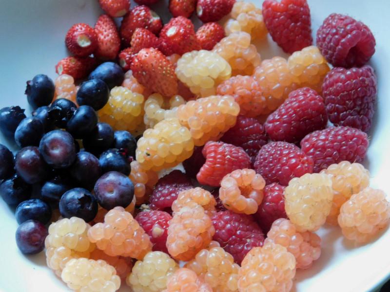 Плодовый сад на 6 сотках