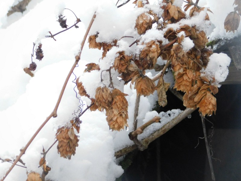 а в саду настоящая зима
