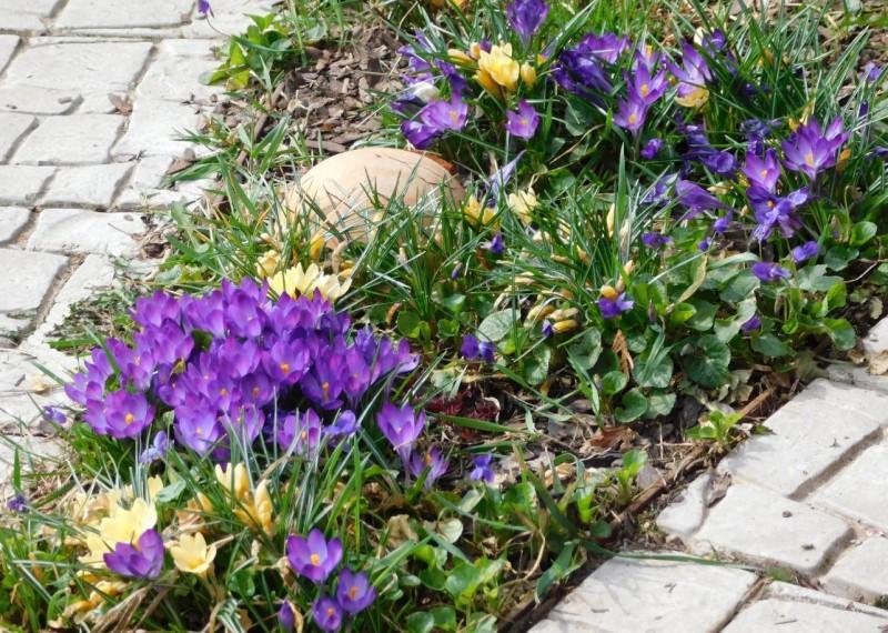 фавориты апрельского сада - мелколуковичные