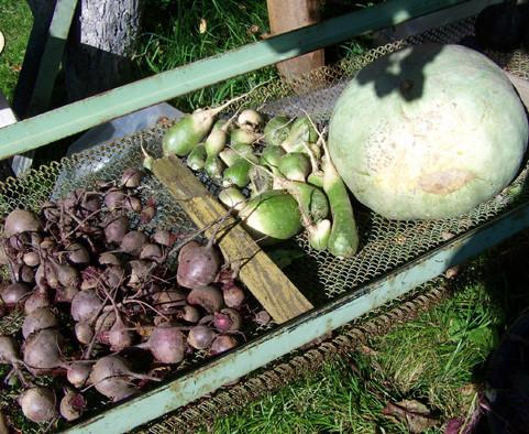 сушка овощей для хранения