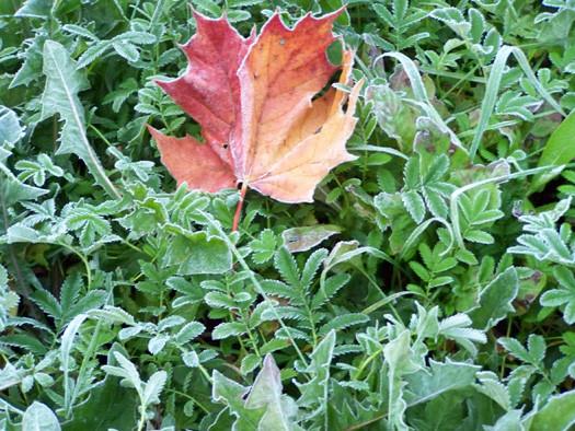 осень, первые морозы