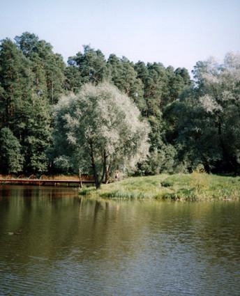 островок на пруду