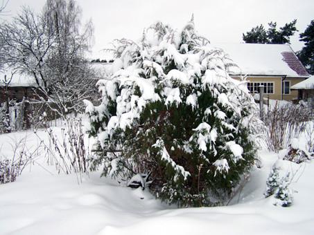 зимний сад10