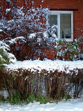 зимний сад7