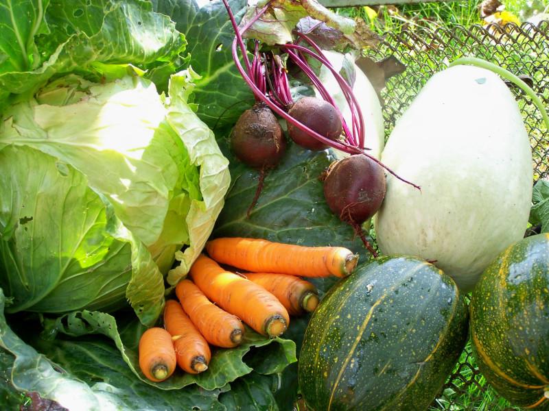 Салат из зеленых помидоры на зиму рецепты с фото