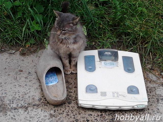 cat1_lj