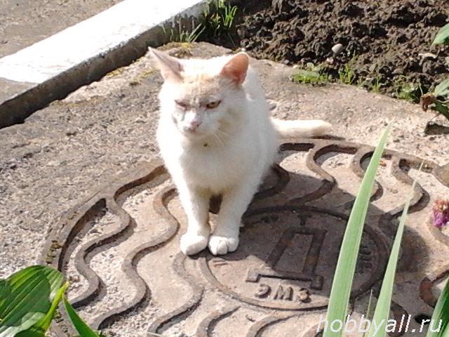 cat4_lj