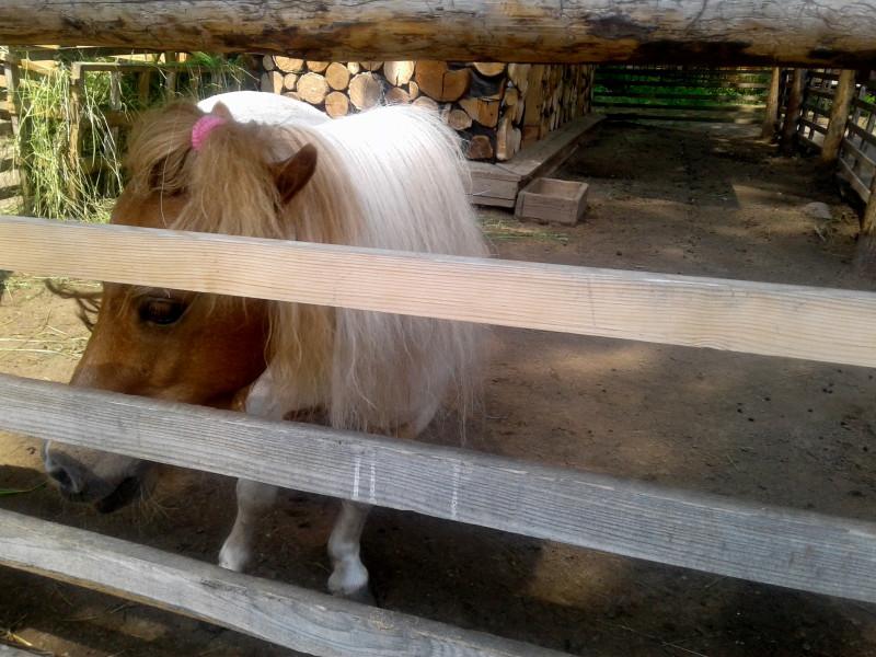 Пони с прической))