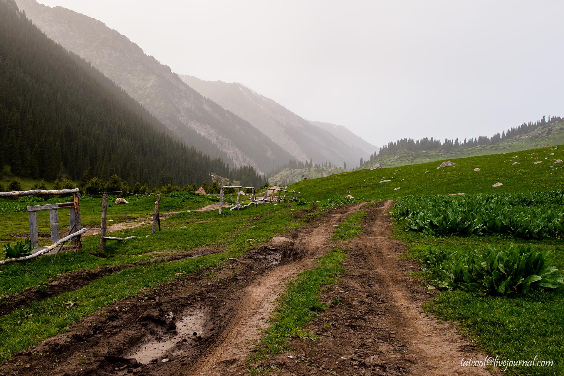 Алтын-Арашан