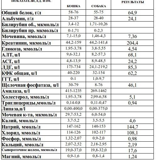 Хпн у кошек анализ мочи санкт петербургская медицинская педиатрическая академия на литовской