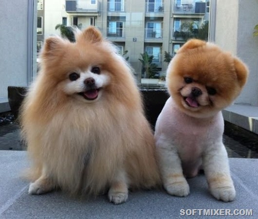 название собак породы и фото