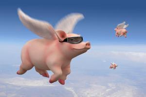 pig-flying