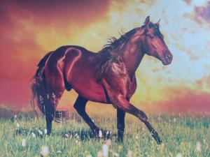 splosion horse