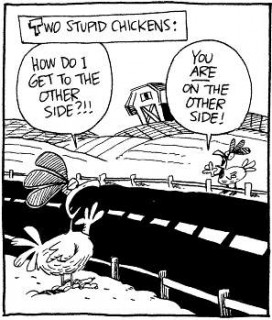 2 Stupid Chickens