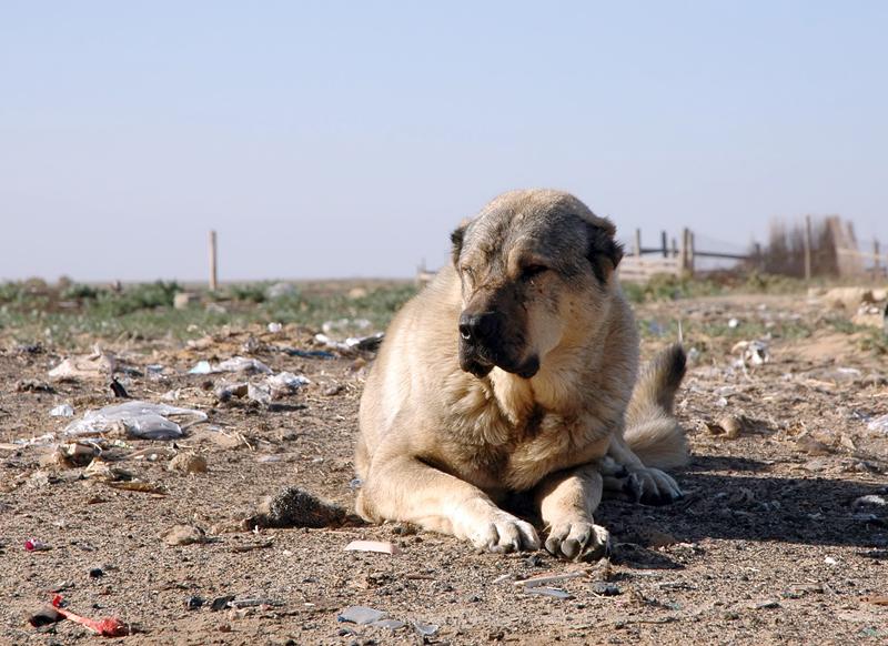 Dog-2-cropped