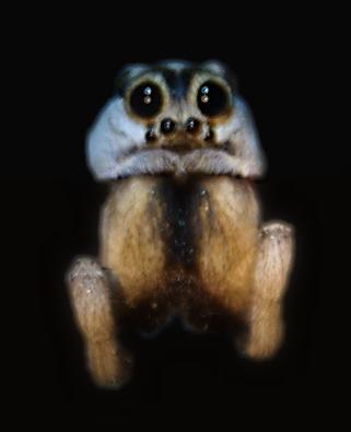 DSC_0324-Lemur-opt_2