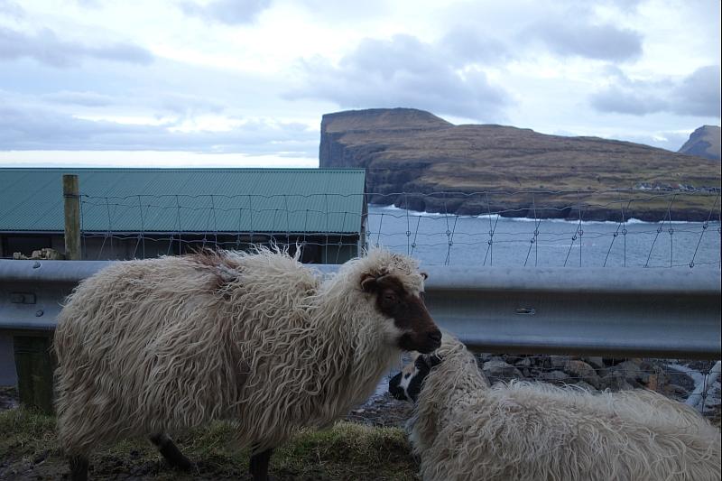 Три овцы, два человека и одна гора 58