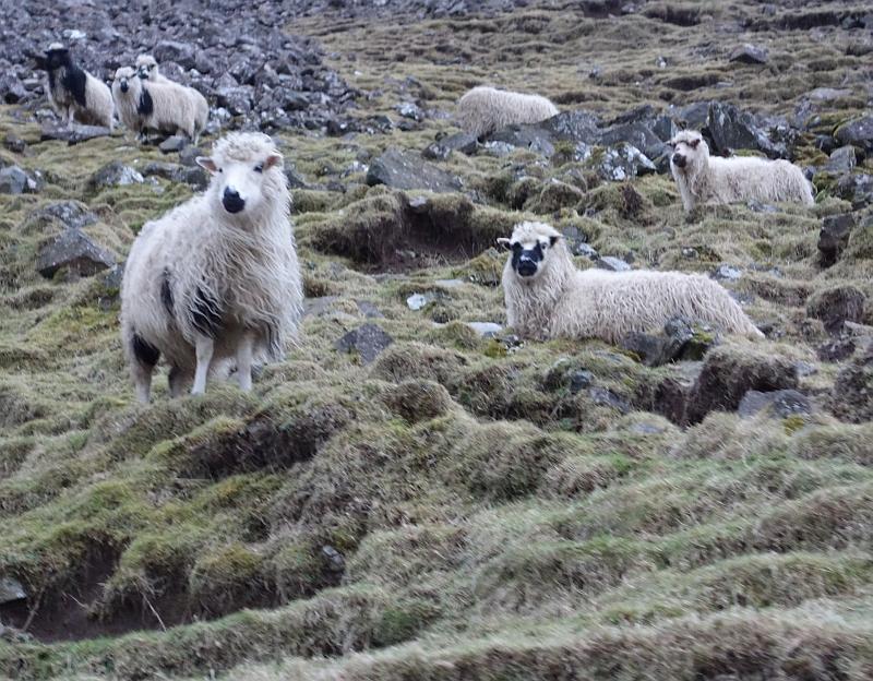 Три овцы, два человека и одна гора женщина
