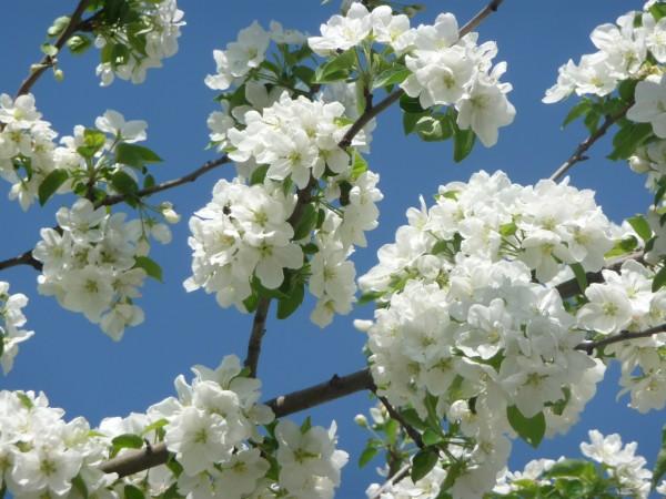 цветы 081