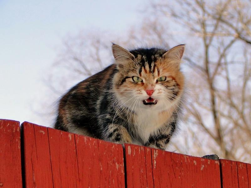 От кота пахнет валерьянкой