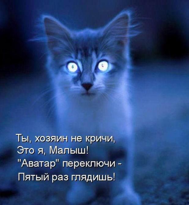 demoti-cat