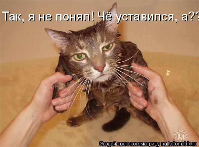 funny-cats5