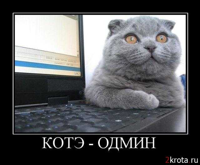 kot-admin
