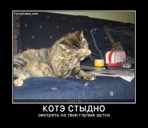 demoti-cat-3