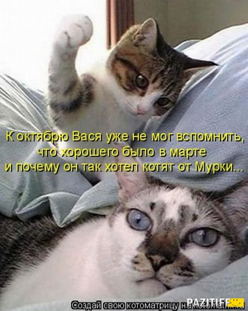demoti-cat-4