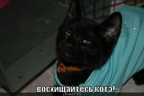 funny-cats8