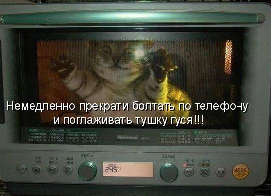 demoti-cat-17